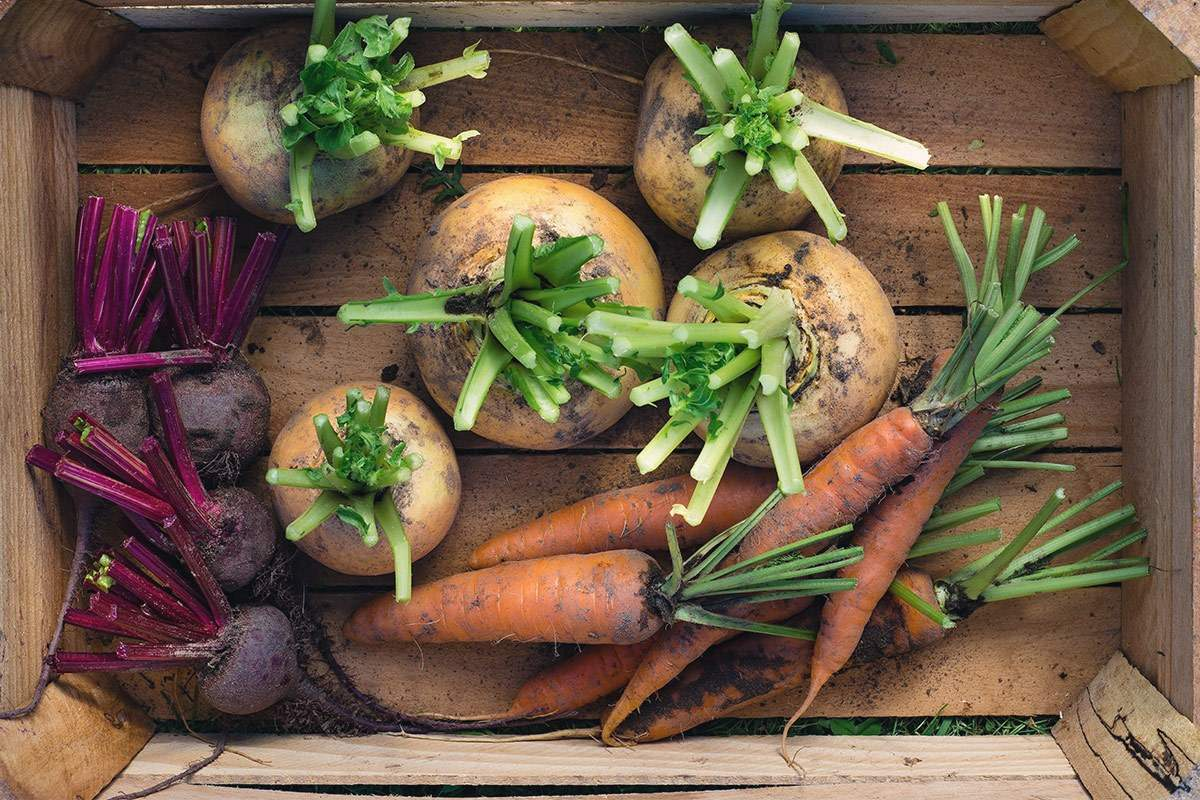 Jak zacząć prawidłowo się odżywiać?